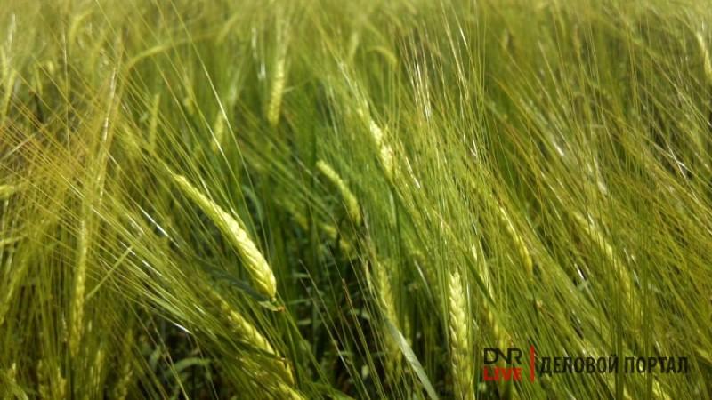Секреты высокого урожая от фермеров ДНР