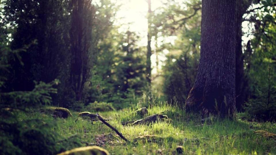 V-Makeevke-otkroyut-park-otdyiha---Urochishhe-shhegla--.jpg