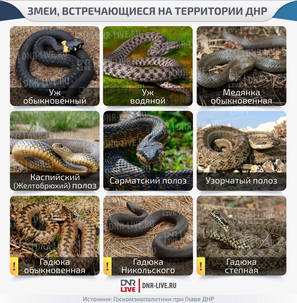 змеи, встречающиеся на территории днр