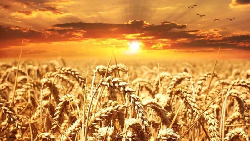 Agrarii-DNR-smogut-sami-vyibirat-vid-nalogooblozheniya.jpg