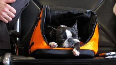 Можно ли завозить собак и кошек в ДНР без ветеринарного осмотра?