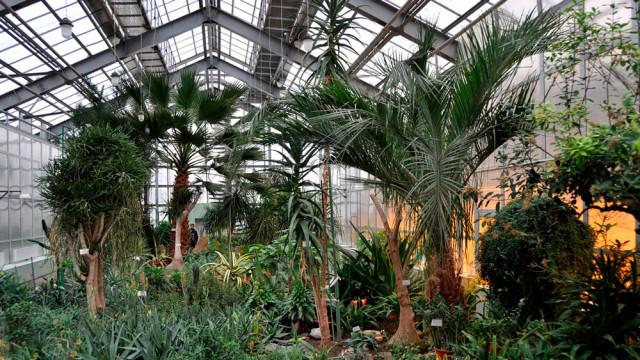 Botanicheskiy-sad.jpg