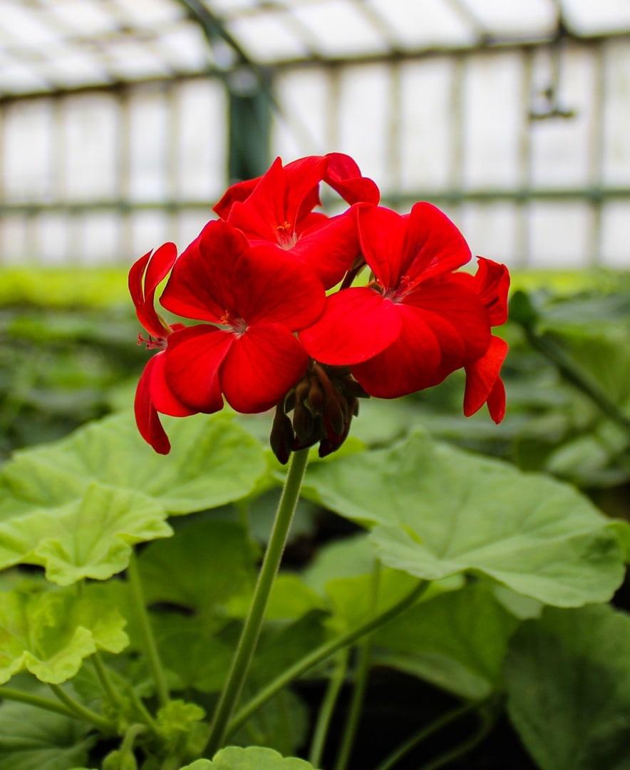 цветы донецк 3